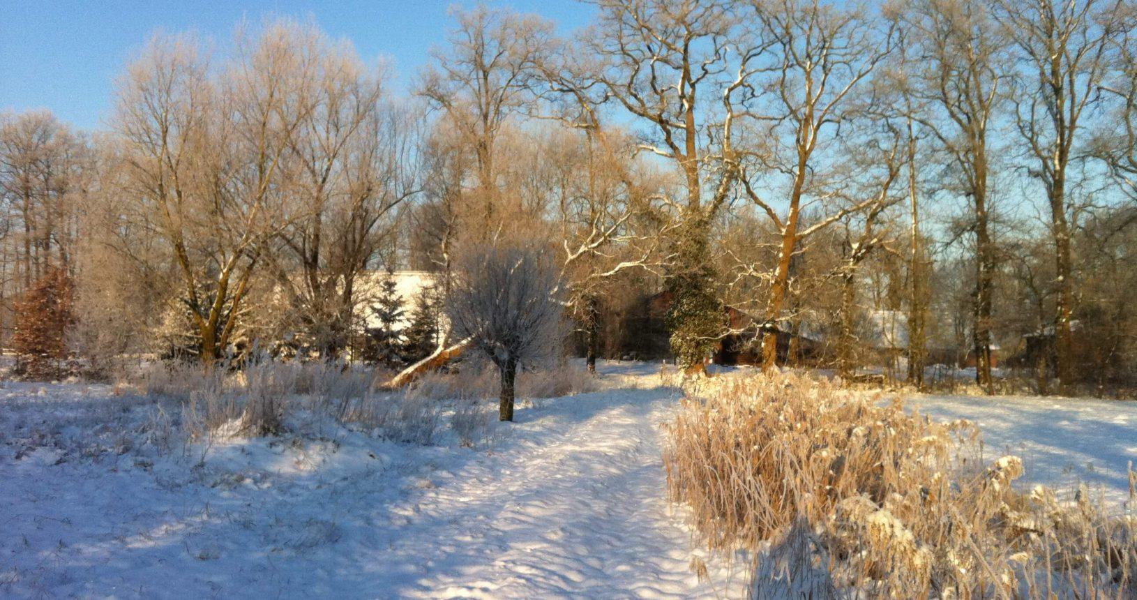 de wolfskamer sneeuw